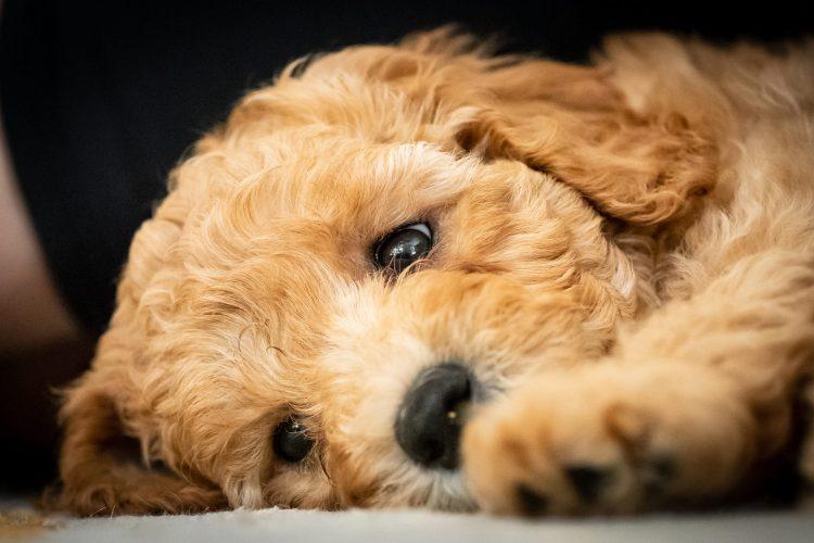 London's Best Puppy Trainer